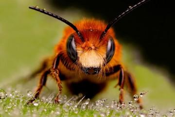 Las abejas nuestros grandes aliados (I)